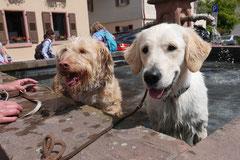 Lindenfels mit Picnic,T-Dogs,15.6.2014,Foto Nr.5
