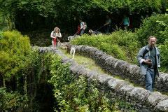 Schweiz-Tessin T-Dogs,Mai 2013, Foto Nr.39