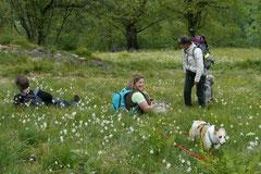 Schweiz-Tessin T-Dogs,Mai 2013, Foto Nr.43
