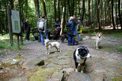 Rund um den Zacken, Trekking-Dogs,30.6.13, Foto Nr.11