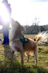 Rod an der Weil, T-Dogs,12.1.14, Foto Nr.22