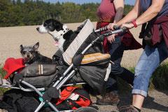 Grünwiesenweiher Welttierschutztag, T-Dogs, 4.10.2014 Foto Nr.7