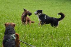 Bensheimer Weinlagen,T-Dogs,22.11.2014, Foto Nr.3