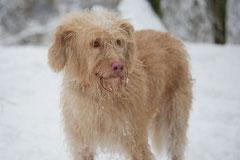 Altkönig,T-Dogs,01.2.2014, Foto Nr.14