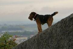 Bensheimer Weinlagen,T-Dogs,20.10.13, Foto Nr.10