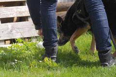Mantrailing+Wandern Rhön,T-Dogs,30.4.-3.5.2015 Foto Nr.27