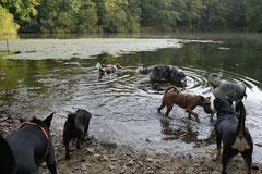 Hundeschulausflug Sicher auf 4 Pfoten, Grüner See, 28.9.14, Foto Nr.15