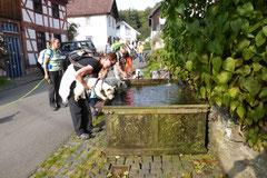 Taunushöhen,T-Dogs, 7.9.2014, Foto Nr.14