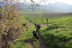 Bensheimer Weinlagen,T-Dogs,22.11.2014, Foto Nr.18