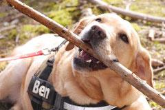 Drachenwege, T-Dogs, 8.3.2015 Foto Nr.12