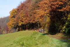 Fischbachtal,T-Dogs,23.11.2014, Foto Nr.12