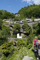 Schweiz-Tessin,T-Dogs,Mai 2014 Foto Nr.29