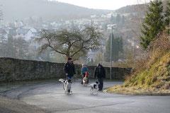 Rod an der Weil, T-Dogs,12.1.14, Foto Nr.2