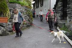 Schweiz-Tessin T-Dogs,Mai 2013, Foto Nr.21
