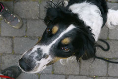 Rheinsteig Impressionen,T-Dogs, 27.07.2013 Bild Nr.6