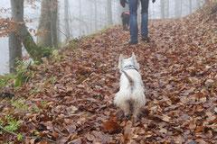 Rhön,Wellness+Wandern,Nov 2013 Foto Nr.:24
