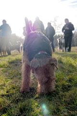 Rod an der Weil, T-Dogs,12.1.14, Foto Nr.23