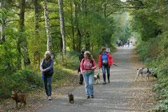 Hundeschulausflug-Sicher auf 4 Pfoten-28.9.13 Foto Nr.1