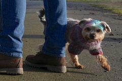 Rod an der Weil, T-Dogs,12.1.14, Foto Nr.12