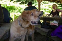 Lindenfels mit Picnic,T-Dogs,15.6.2014,Foto Nr.14