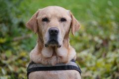 Rhön,Wellness+Wandern,T-Dogs,7.-9.11.2014, Foto Nr.8