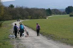 Rheingauen Gebück,T-Dogs,29.+30.3.14, Foto Nr.15