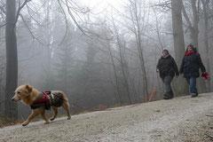 Schnuppertour Bleibeskopf,T-Dogs,14.12.2013, Foto Nr.9