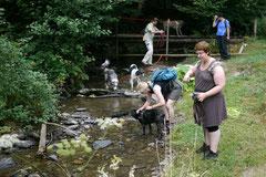 Wispersee, T-Dogs,28.07.2013, Bild Nr.7