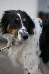 Gimbi,Staufen,Kaisertempel,T-Dogs,2.2.2014, Foto Nr.6