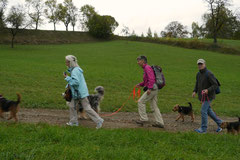 Bensheimer Weinlagen,T-Dogs,20.10.13, Foto Nr.6