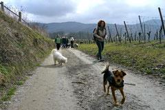 Bensheimer Weinlagen, März 2013 Foto Nr.6