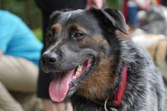 Grünwiesenweiher, T-Dogs, 6.7.14, Foto Nr.10