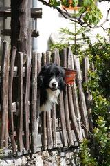 Schweiz-Tessin,T-Dogs,Mai 2014 Foto Nr.40