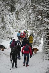 Altkönig,T-Dogs,01.2.2014, Foto Nr.9