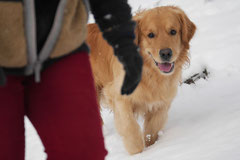 Nele Neuhaus Krimi Tour, T-Dogs, 1.2.2015 Foto Nr.4