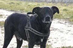 Bensheimer Weinlagen, T-Dogs, 25.1.14, Foto Nr.5