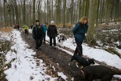 Altkönig,T-Dogs,01.2.2014, Foto Nr.1