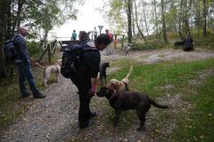 Kapersburg+Winterstein, T-Dogs, 5.10.2014, Foto Nr. 3