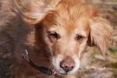 Drachenwege, T-Dogs, 8.3.2015 Foto Nr.13