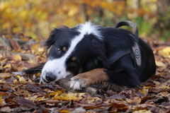 Bensheimer Weinlagen,T-Dogs,22.11.2014, Foto Nr.15