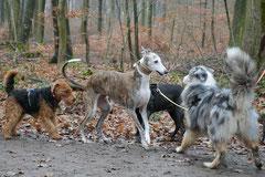 Hofheimer Kapellenberg,T-Dogs,15.12.2013, Foto Nr.8
