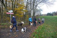 Rhön,Wellness+Wandern,T-Dogs,7.-9.11.2014, Foto Nr.11