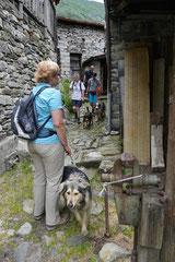 Schweiz-Tessin,T-Dogs,Mai 2014 Foto Nr.47