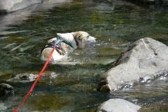Schweiz-Tessin T-Dogs,Mai 2013, Foto Nr.14