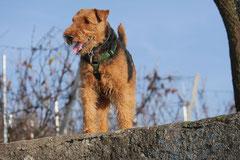 Bensheimer Weinlagen,T-Dogs,22.11.2014, Foto Nr.13