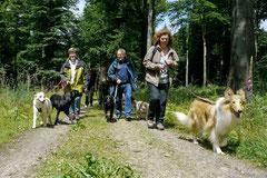 Rund um den Zacken, Trekking-Dogs,30.6.13, Foto Nr.23