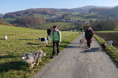 Fischbachtal,T-Dogs,23.11.2014, Foto Nr.11