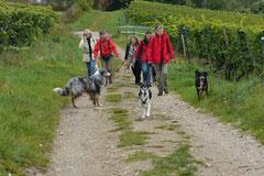 Klosterrunde,T-Dogs,06.10.2013, Foto Nr.7