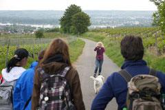 Himmelssteig+Mühlenweg,T-Dogs,10.5.14,Foto Nr.13