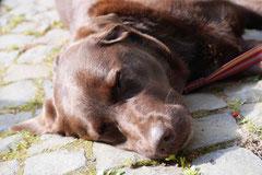 Grünwiesenweiher Welttierschutztag, T-Dogs, 4.10.2014 Foto Nr.25
